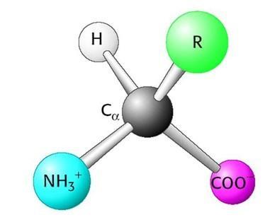 氨基酸结构图