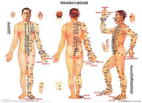 身体内脏部位图解