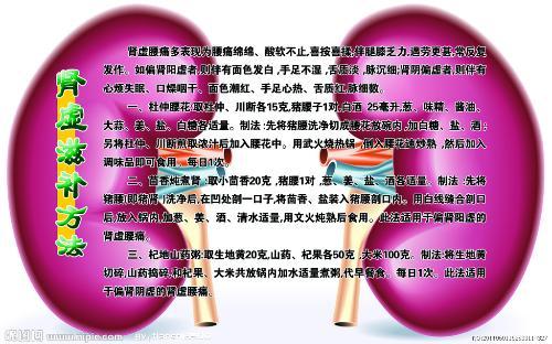 肾组织手绘图