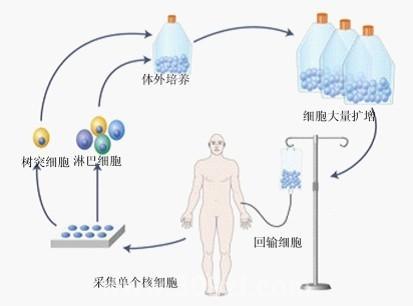 生物实验的基本步骤