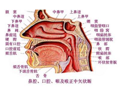 《鼻通散》 中医恩师留下的治疗鼻炎绝方 - 新文明之光 - 新文明之光