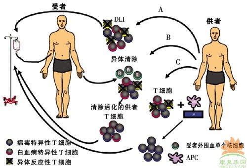 生物免疫疗法流程图