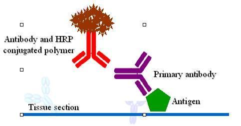 免疫组化 - 搜搜百科