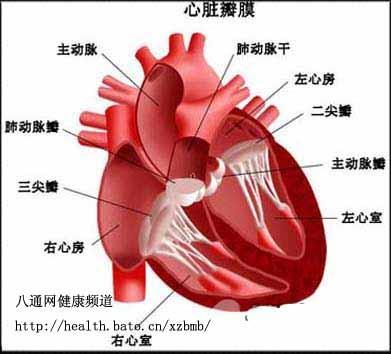 全部版本 历史版本  心脏瓣膜疾病就是指二尖瓣,三尖瓣,主动脉瓣和肺