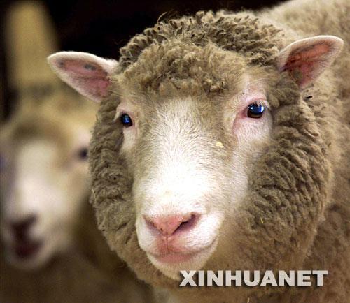 转基因动物表达系统,包括外源基因