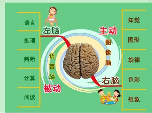 左脑��!$_这是因为名字都是文字,是左脑记忆的,容易忘记;模样是图像,用右脑记的
