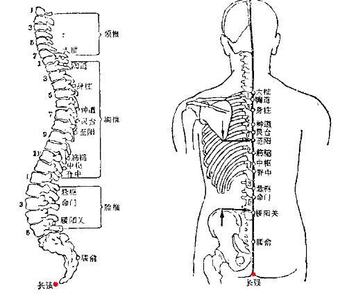 腰推盘结构示意图