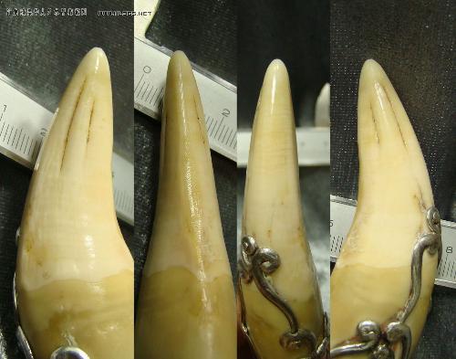 虎牙图片虎牙老虎牙齿老虎牙齿图片