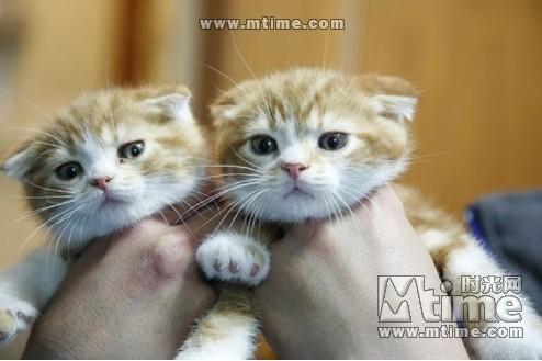 小猫头像带字加可爱
