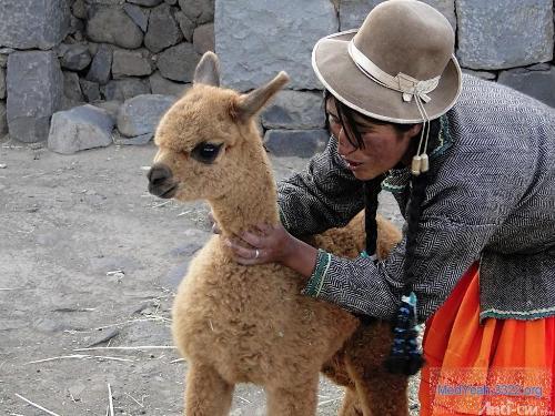 用泥做的可爱动物图片