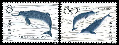 白鳍豚卡通简笔画