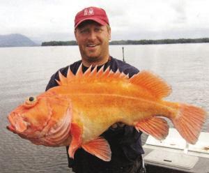 巨型非洲食人鱼