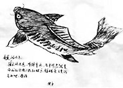 """就画了一条鱼给儿子,并留言说:""""亲爱的儿子,时间紧迫,我没来得及做菜"""