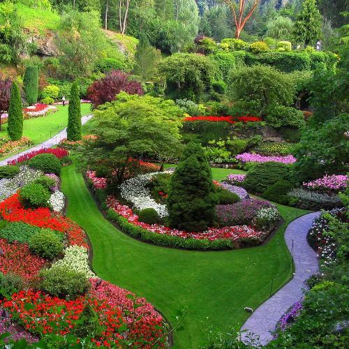 园林景观植物养护