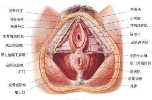 或男性性腺和性感器官发育不良且长期以女性生活者