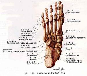跖骨趾骨骨折