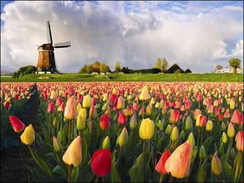 ...荷兰的大风车,但是小型的风车模型纪念品是可以的,权当是你来...