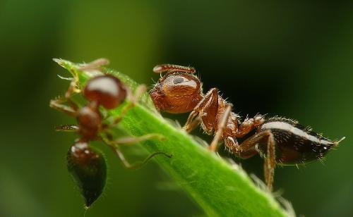 蚂蚁是动物界的小动物,可是它有很大的力气.