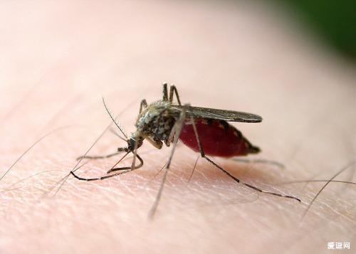 埃及金字塔蚊子