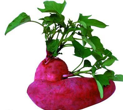 全部版本 历史版本   碱性食物 除了五谷杂粮外的植物性食品.