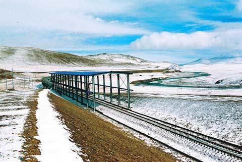就是青藏铁路专门为藏羚羊等野生动物迁徙而建设的