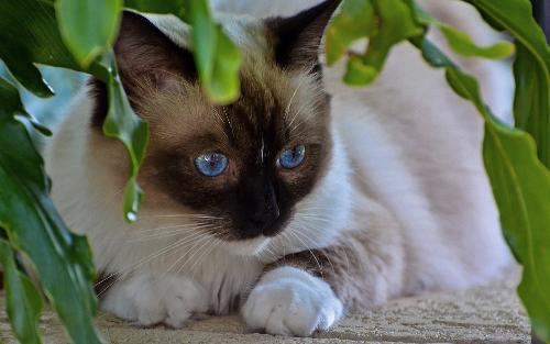 两只暹罗猫不负众望,在瞬息万变的精灵森林找到了