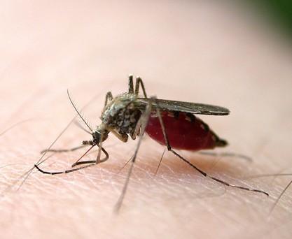 每到夏天人类与蚊子间的爱恨情仇,每次洗澡都像是在给蚊子洗菜!