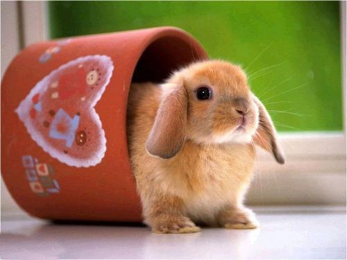 鼠科动物有哪些图片