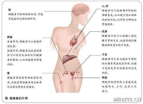 女性生理器官图