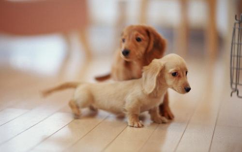 犬类智商排名 - 搜狗百科