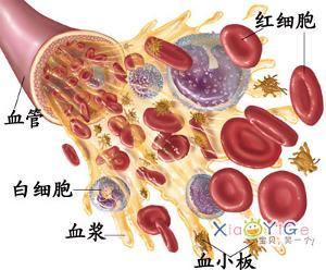 血常规血白细胞偏高