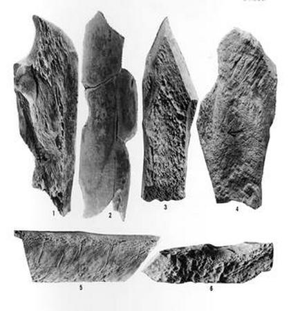 原始时代的动物