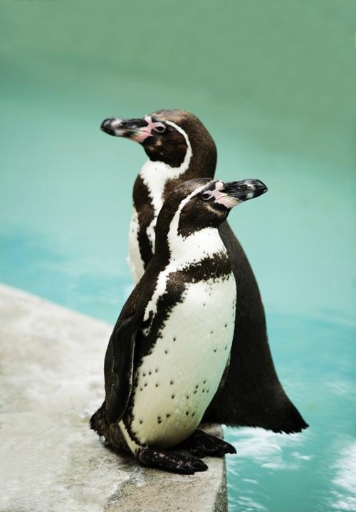 企鹅(动物名称) - 搜狗百科