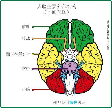 脸部结构图并带名称图
