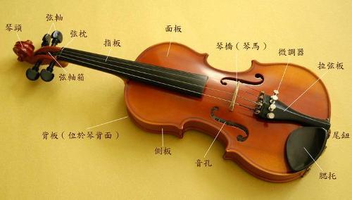 琴弦共有4根. 小提琴琴身(共鸣箱)长约35.图片