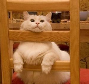 壁纸 365棋牌娱乐城_365棋牌唯一官网活动_365棋牌电脑下载手机版下载 猫 猫咪 小猫 桌面 300_283