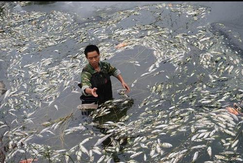 水污染资料图片