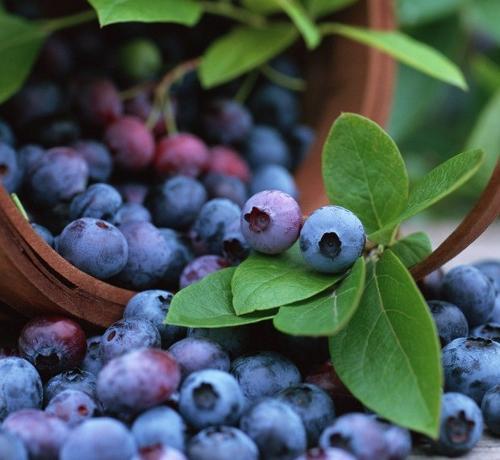 蓝莓水果卡通图片