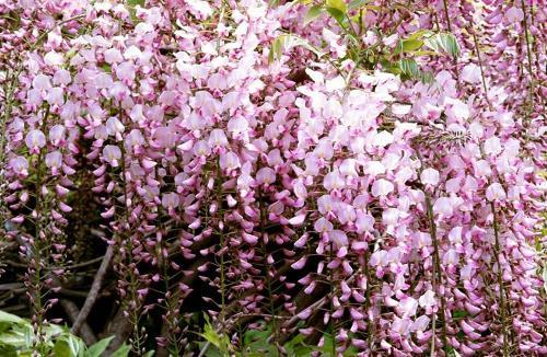 徘徊于庭院中,见一树盛开的紫藤萝花,睹物释怀,由花儿自衰到盛,转悲为