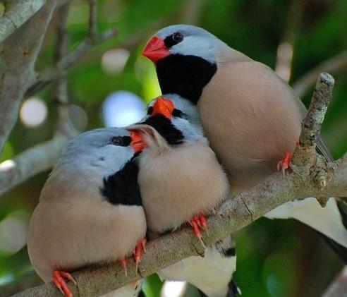 壁纸 动物 鸟 鸟类 雀 492_421