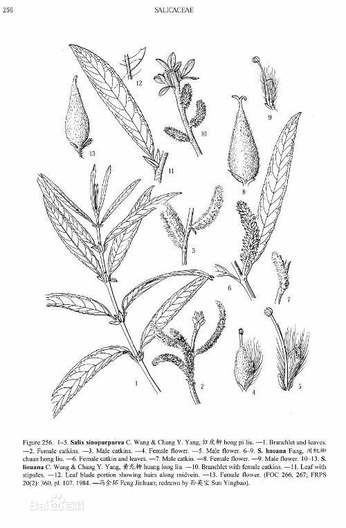 园林河边手绘线稿