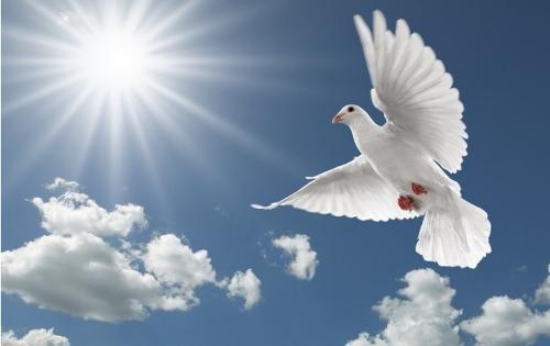 基督教象天空的鸽子歌谱