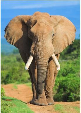 大象幼儿园范画