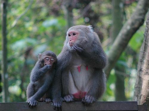 国家一级保护动物 - 搜搜百科