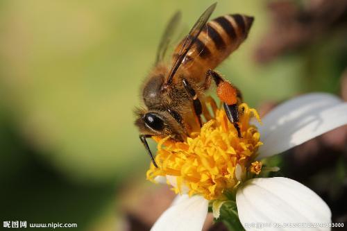 蜜蜂 手绘 场景图