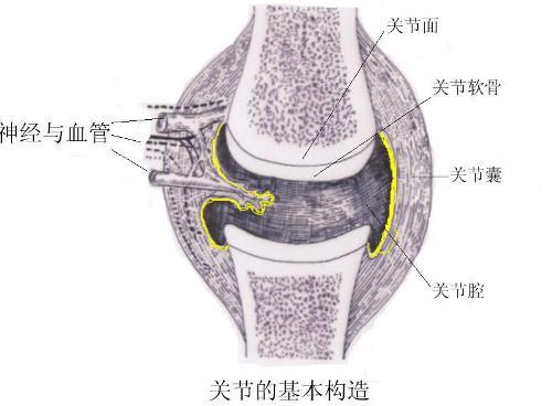 关节囊,韧带和附近的肌肉; 关节的辅助结构:包括韧带,关节盘,关节唇