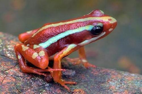 金刺蛙搜搜百科