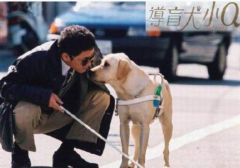 电影 导盲犬小Q