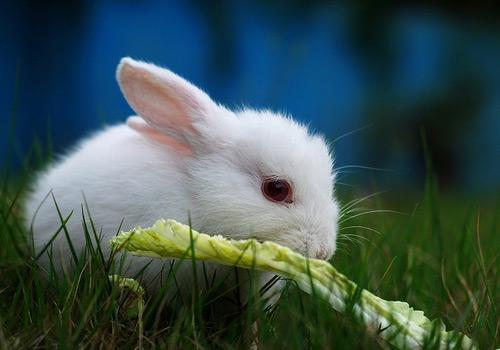 兔子咬耳朵表情素材图片图表情包3d打印图片