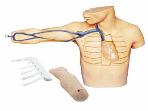 中心静脉穿刺插管模型